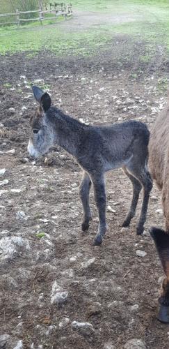 asini nuovi nati by Agriturismo Campo dei Fiori - 2