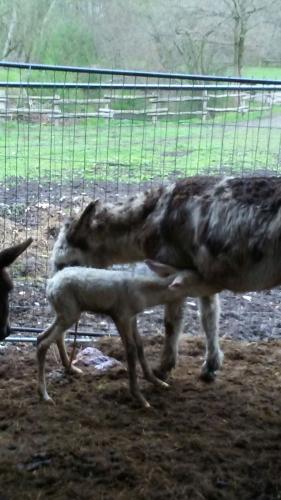 asini nuovi nati by Agriturismo Campo dei Fiori