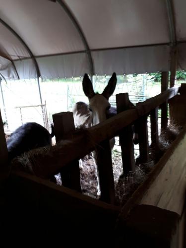 Agriturismo Campodeifiori equini 640