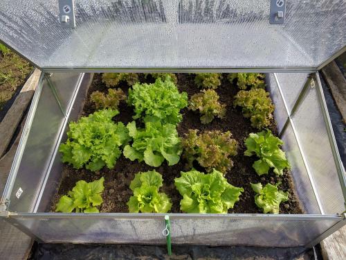 Agriturismo Campodeifiori verdure 677