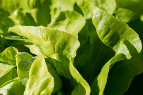 Agriturismo Campodeifiori verdure 679
