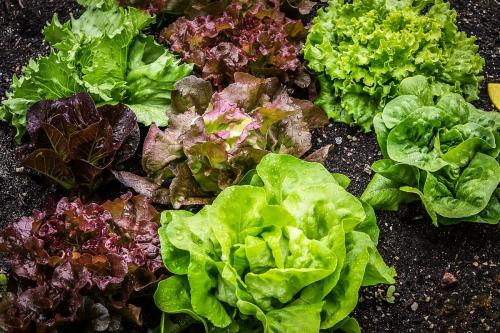 Agriturismo Campodeifiori verdure 680