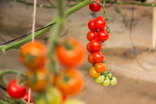 Agriturismo Campodeifiori verdure 685